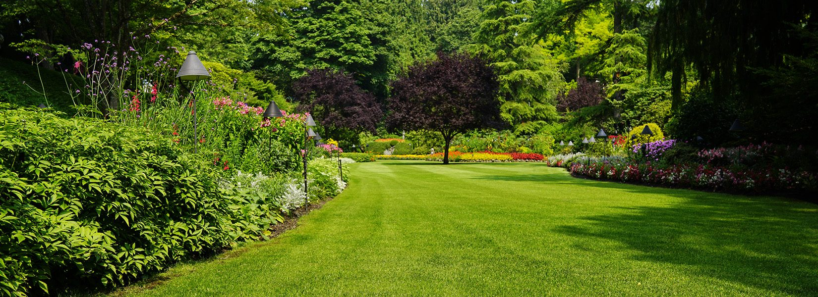 Beautiful trees and green grass  in  garden